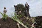 La calidad y eficiencia de las labores agrícolas es uno temas a debatir en la Conferencia Nacional.