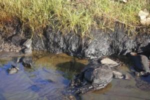 A una semana del suceso aún pueden constatarse los daños al ecosistema aguas bajo de la industria.