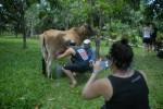 Los turistas extranjeros disfrutan con las tradiciones campesinas cubanas.