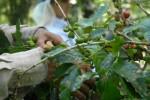 El empleo de las variedades más adaptables a cada territorio influye en los resultados de la cosecha.