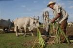 Más de la mitad de las cerca de cien mil hectáreas entregadas se han dedicado al desarrollo ganadero.