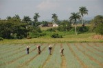 Alrededor de la mitad de las bases productivas de la provincia no utilizan las semillas de la empresa provincial.