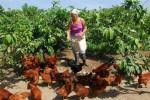 Miles de mujeres rurales, de una forma u otra trabajan la tierra y aprovechan los espacios en parcelas familiares y fincas.