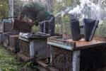 La miel se ratifica como uno de los principales rubros exportables de la provincia de Sancti Spíritus.