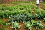 Miles de familias están involucradas en el movimiento agroecológico en la isla.
