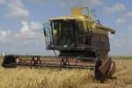 La cosecha se distingue por el favorable rendimiento agrícola y la eficiencia industrial.