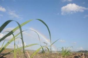 Durante la jornada de este 30 de diciembre se puso en marcha seis sistemas de riego por aspersión en la Cooperativa de Producción Agropecuaria (CPA) Boris Luis Santa Coloma.