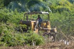 En el Valle de los Ingenios se han desbrozado de marabú y otras malezas más de 1 400 hectáreas.