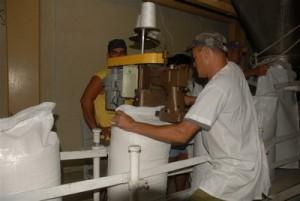 La línea montada para producir azúcar blanco se utiliza ahora para este surtido de exportación.
