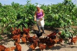 Más 2 000 han sido beneficiadas con la entrega de tierras en usufructo.
