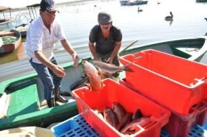 Luego de una dura faena nocturna, los pescadores regresan a entregar las capturas.