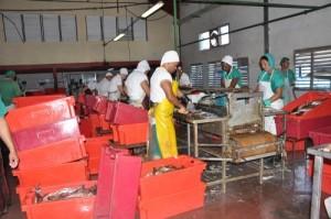 Lo más significativo en esta etapa es el incremento en los envíos de carpa a la industria.