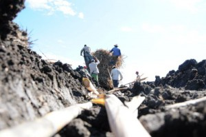 Entre noviembre y abril, los azucareros espirituanos han plantado más de1 100 hectáreas de caña.