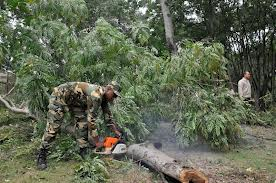 La Formación Especial Ingeniera Forestal está destinada a la desobstaculización de vías, en caso de huracanes o intensas lluvias.