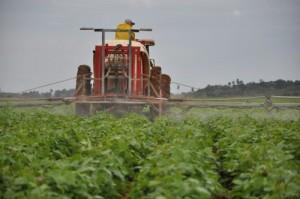La producción de frijoles será uno de los proyectos potenciados.
