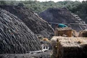 Todos los municipios espirituanos se han sumado a la fabricación del carbón vegetal.