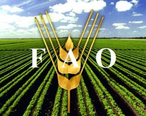 La FAO asegura que  aun cuando la región es exportadora neta en ese sentido, obtiene el 57 por ciento de sus importaciones agroalimentarias desde fuera del área.