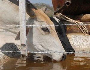 Una investigación aleccionó acerca de la correcta planificación del agua en la cría de ganado.
