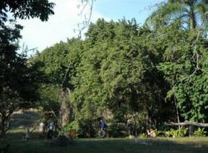 El Jardín Botánico pudiera convertirse en un espacio distintivo y único de la geografía espirituana.