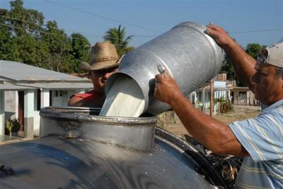 Cumplen campesinos guaimareños compromisos lecheros con la industria