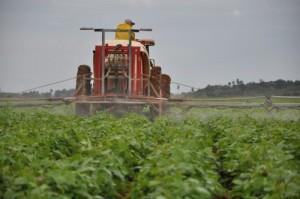 En la granja Batey Colorado, Yaguajay, se volverá a cultivar el grano.