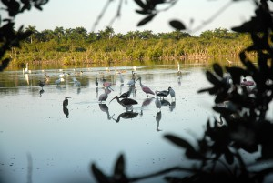 La fauna privilegiada de Caguanes muestra su recuperación.