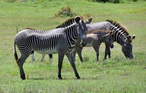 Especies donadas por Namibia a Cuba, en el Parque Zoológico Nacional de Cuba. FOTO/Marcelino VAZQUEZ