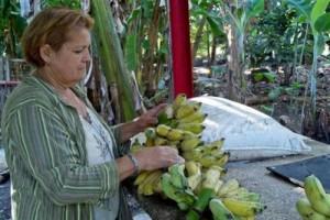 Adolfo Rodríguez Nodals, jefe del Grupo Nacional, resaltó la necesidad de aumentar el surtido de frutas.