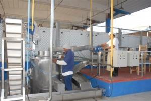 Por dos años seguidos el territorio ha incumplido el aporte de cebolla a la industria para la sustitución de importaciones.