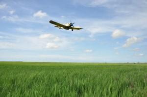 Buena parte de la atención al cultivo descansa en la aviación.