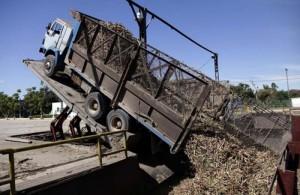 El Uruguay prevé incrementar el tiro directo de la caña hasta la industria. Foto: Ismael Francisco
