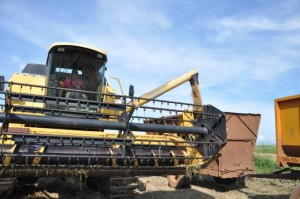 La producción de arroz resultó determinante para que el municipio de La Sierpe mereciera la sede del acto.