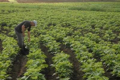 Uno de los productos que elabora el centro está dirigido a la producción de granos.