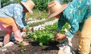 El 15 de octubre de cada año se celebra el Día Mundial de la Mujer Rural.