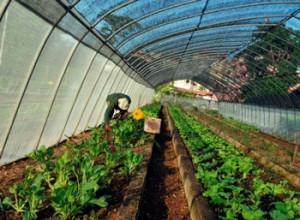 El evento buscó favorecer el objetivo de alcanzar el desarrollo sostenible en la producción de alimentos al que pretende Cuba.