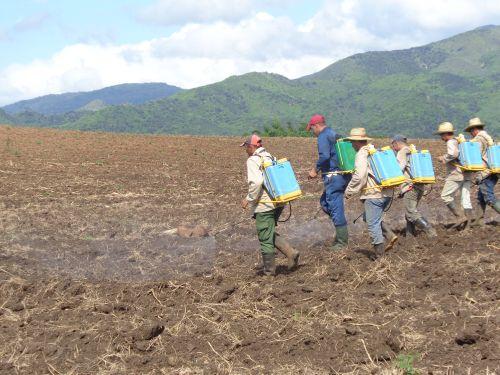 A un costado de Guarico los obreros riegan herbicidas al área de caña recién plantada.