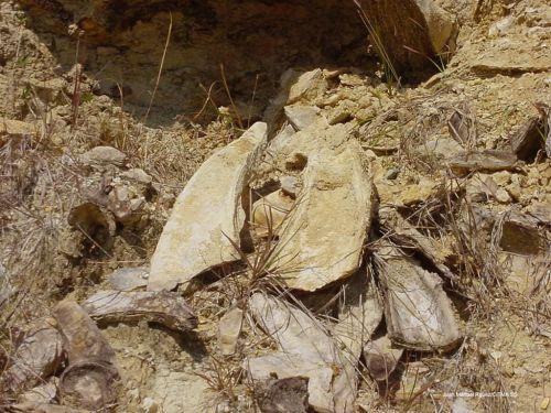 Los fósiles encontrados permiten a los expertos asegurar que el sitio es importante como elemento paleo referencial con respecto al ecosistema actual.