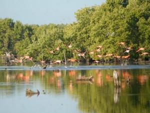 Manglares del Parque Nacional Caguanes.