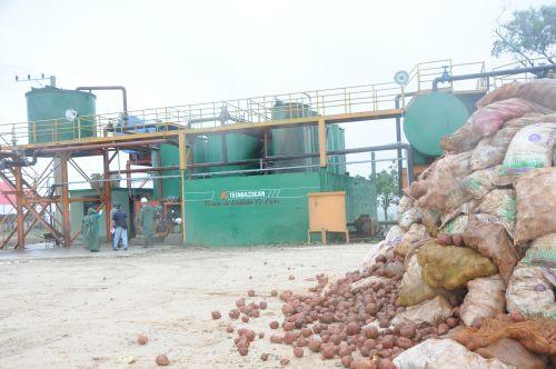 Para producir en cada jornada 25 toneladas de ensilado la planta requiere 10 toneladas de viandas.