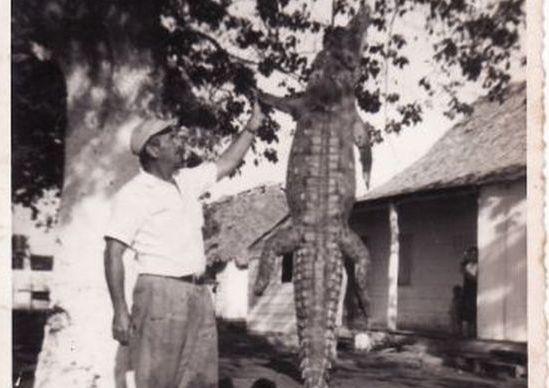 cocodrilos, sancti spiritus, fundacion, museo de la fundacion antonio nuñez jimenez,