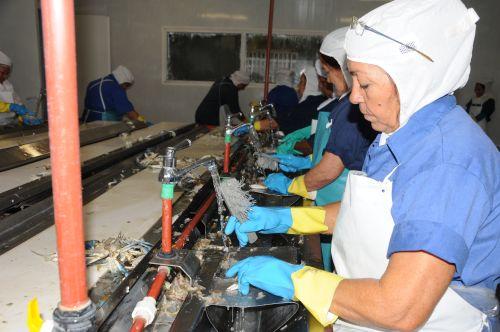 Más de 1 400 toneladas de especies marinas se procesaron en la industria sureña.