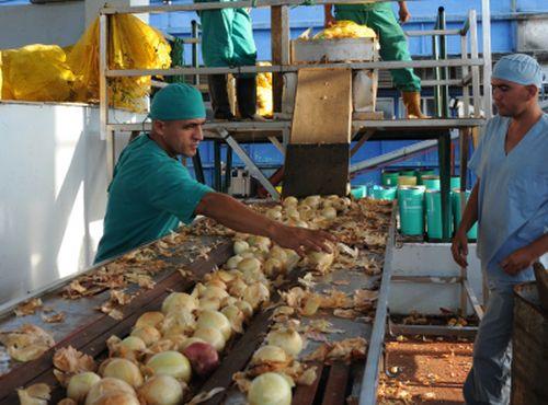 sancti spiritus, fabrica de conservas, cebolla, sustirucion de importaciones
