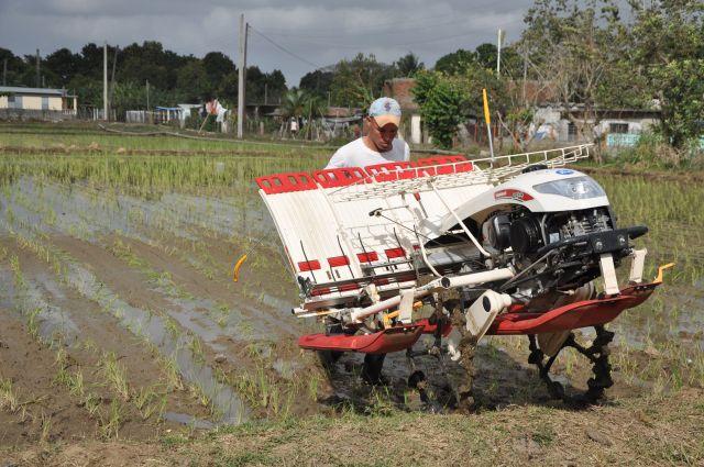 Con la máquina se logra mayor calidad en la siembra y ahorra fuerza de trabajo.