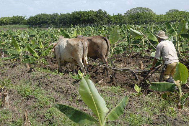 Varias producciones agropecuarias logran sobrepasar sus niveles históricos en el último año de trabajo. Foto: Vicente Brito