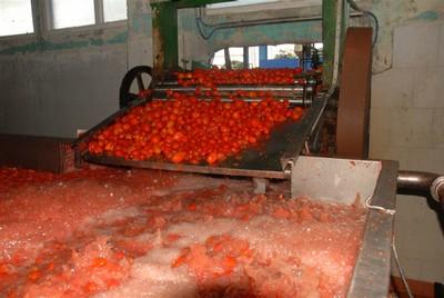 Moler el tomate fresco redunda en la calidad de la pasta.