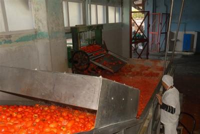 La línea para la elaboración de pasta de tomate acumula 15 años de explotación.
