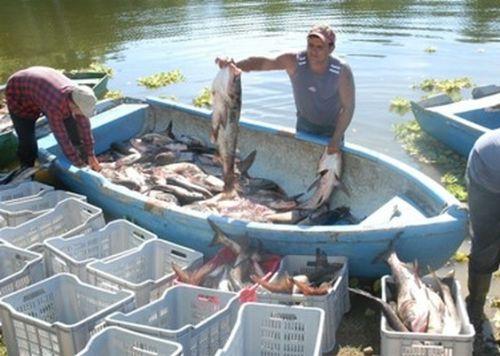 pesca, sancti spiritus, industria pesquera, pescaspir, presa zaza
