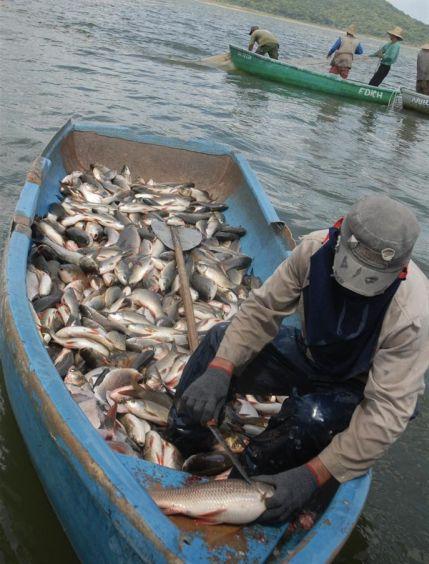 pesca, sancti soiritus, empresa pesquera sancti spiritus, presa zaza, presa higuanojo, recursos hidraulicos