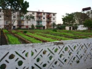 El aumento de la producción de alimentos en todos los espacios aprovechables resulta uno de los temas de debate.
