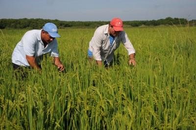 El sector cooperativo y campesino aporta la mayor parte de las producciones agropecuarias en Sancti Spíritus.